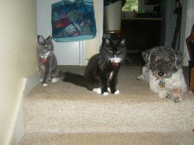 Buffy, Bella, and Pete
