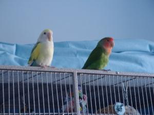 Liz's birds